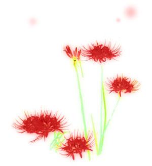 水彩風の彼岸花(4パターン)