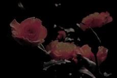 flower302
