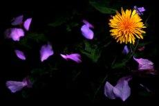 flower331