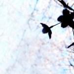 桜のシルエットと青い空(2パターン)
