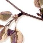 桜の枝の写真素材