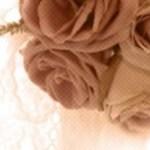 薔薇の写真素材(2パターン)