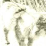 長毛の猫の写真素材