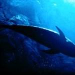 イルカの写真素材