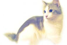 猫の写真素材