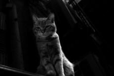 見下ろす野良猫