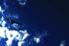 空とカモメの写真素材