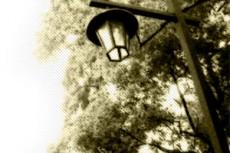 木と街灯の写真素材