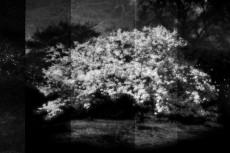 cover-flower002-3