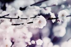 cover-flower005-3