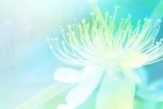 cover_flower004
