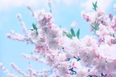 flower379-2