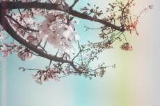 flower390-2