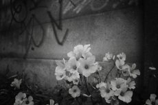 flower393-3