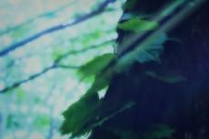 flower394