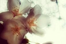 flower403