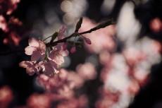 flower405-2