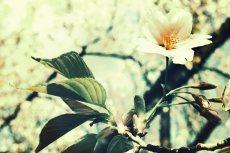 flower402-3