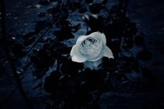 flower426-2
