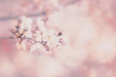 flower429