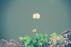 flower442