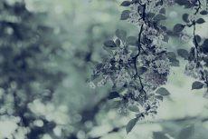 flower450-3