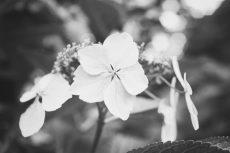flower468-3