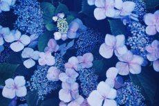 flower470
