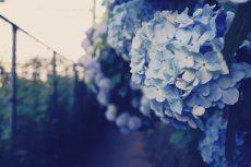 flower473