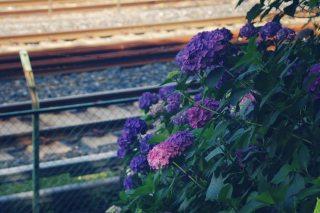 【高解像度】線路と紫陽花(アジサイ)のある風景(3パターン)