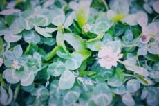 flower482