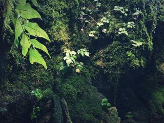 【高解像度】苔むす岩