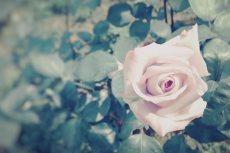 flower499
