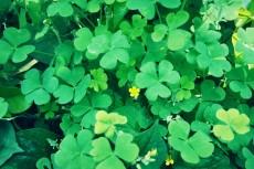flower510