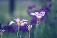 flower521