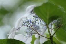 flower525-2