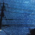 【高解像度】電柱と雨