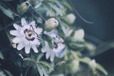 flower554-2