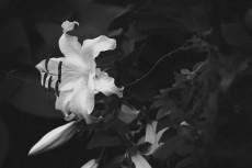 flower555-3