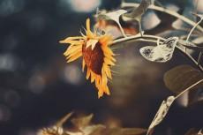 flower558-2