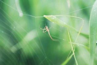 【高解像度】巣を作る蜘蛛(3パターン)