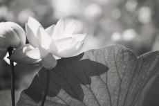 flower565-3