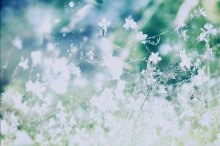 【高解像度】光と花が滲むような景色(3パターン)
