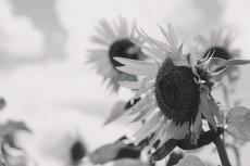 flower581-3