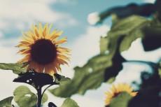 flower586-2