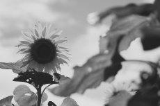 flower586-3