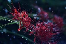 flower602