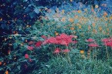 flower615