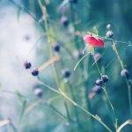 【高解像度】か細い赤い花(3パターン)
