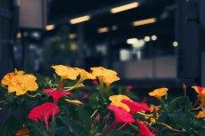 flower627-2